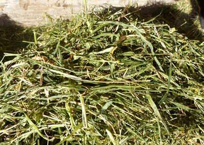 Barley Peas Oats Fall Haylage