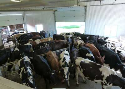Holding area shows mixed herd